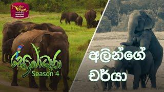 Sobadhara - Sri Lanka Wildlife Documentary | 2020-09-11 | Elephant's behaviour