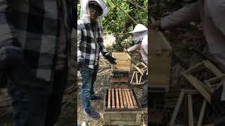 Phần 1: Chuyển đàn ong từ thùng nuôi truyền thống sang Nhà Nuôi Ong Thông Minh Honey Home