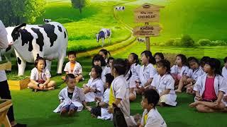Bé vắt sữa bò - Viettopia quận 7. 20180826