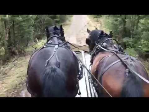 Unghästköring i par Sköldéns Hästkurs