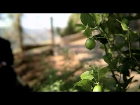 """Olive"" - The first full length feature film shot completely on a N8"
