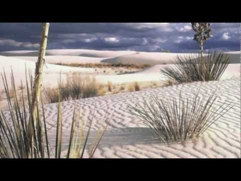 essay on xerophytes A plant that is adapted to an arid environment many xerophytes have specialized tissues (usually nonphotosynthetic parenchyma cells) for storing water, as in the.