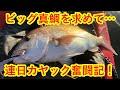 ビッグ真鯛を求めて 連日カヤック奮闘記 mp3