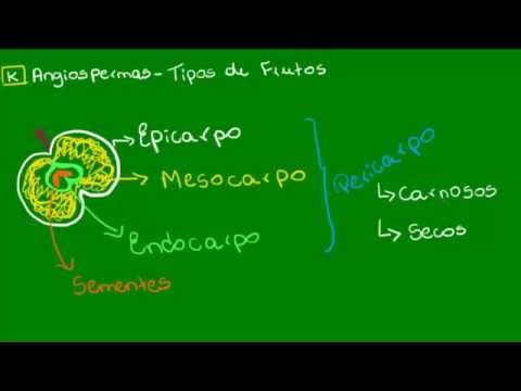 Frutos carnosos e secos - Botânica - Biologia