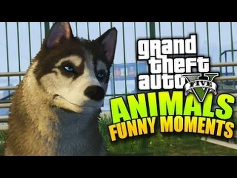 GTA 5 PLAYING AS ANIMALS (Next Gen FUNNY MOMENTS)