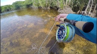 Stalking Predatory Fish in Tiny Clear Creeks