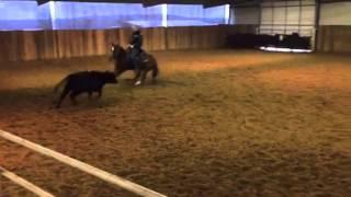 Treyd- Jared Lesh Cowhorses