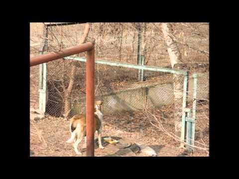 В мире животных: Ворона,кот и собака