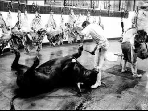 animales masacrados por agrosuper