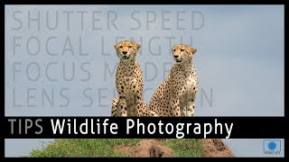 Wildlife Photography Tips and Tricks