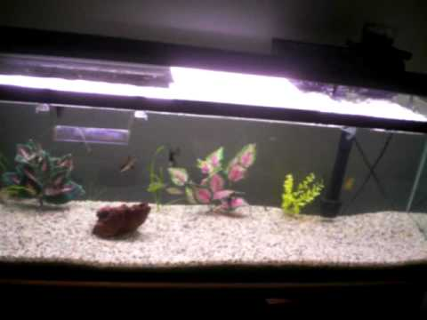 60 gal tropical fish tank
