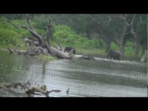 Yala National Park in Sri Lanka