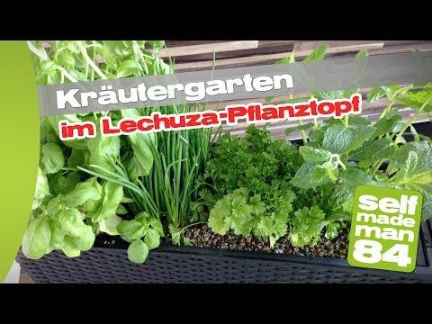 Thermomix TM31 - Kräutergarten Für Die Küche Im Lechuza