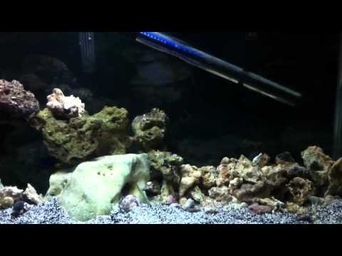 29 Gallon Salt Water, fish only with live rock [FOWLR] - 2012/02/01