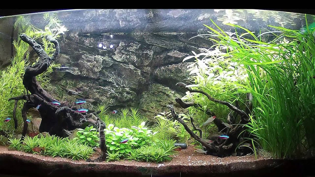 Bac amazonien 300l amazon tank 79gal youtube for Aquarium meuble tv