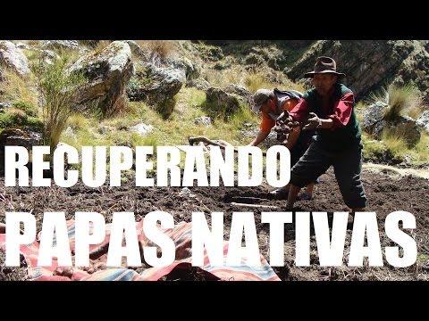 Experiencias recuperacion papas nativas