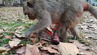 Newborn monkey cry loudly cuz her mom, Why young mom take her like this