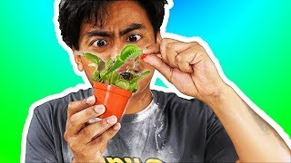 I Tried Feeding Venus Fly Traps!