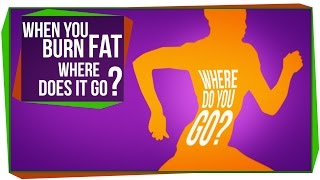 When You Burn Fat, Where Does it Go?