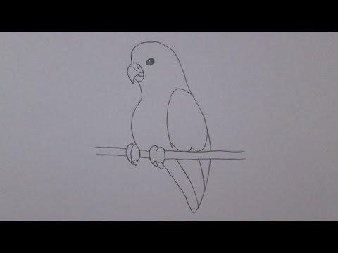 Como desenhar um periquito