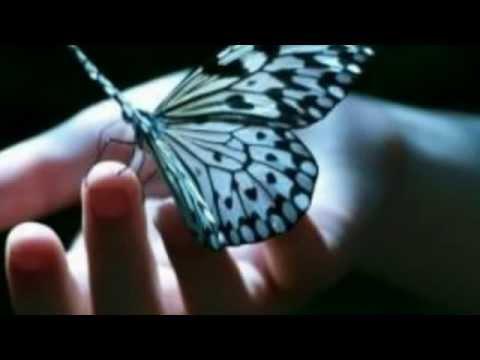 Aloke Bihivi Pathireyido- H.r Jothipala video