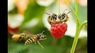 Giải mã Ong bay vào nhà là điềm báo gì  rất thú vị và kỳ lạ