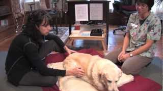 HeartFire Veterinary Acupuncture