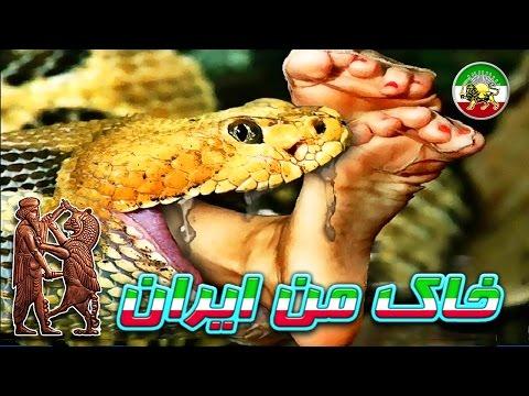 مستند فارسی - مار های غول پیکر آدم خوار ★ thumbnail
