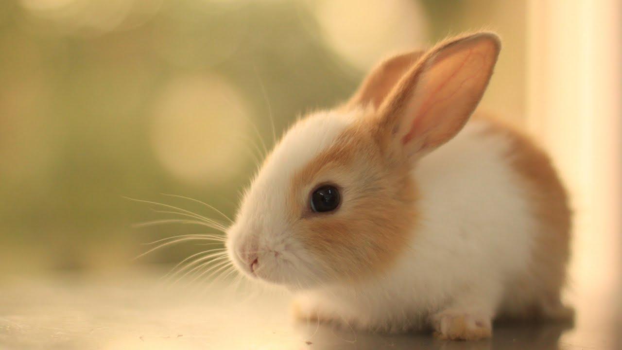 Should Animal Testing ...