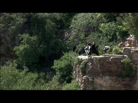 California Condors in Grand Canyon National Park