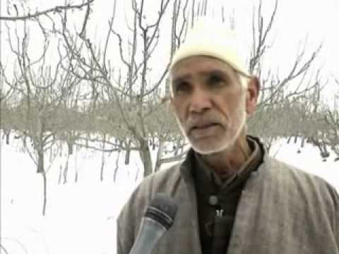 Rains hailstorm damage apple crops in Kashmir (Hindi)