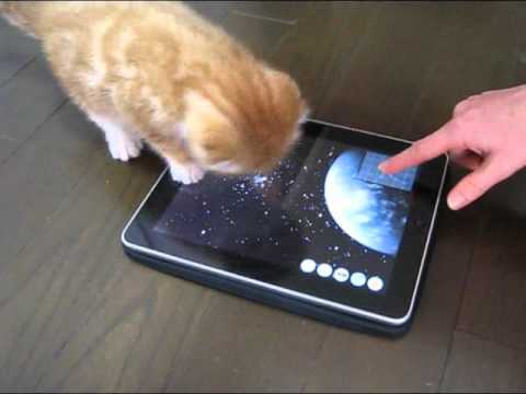 Kitten and iPad Game App - Enjoy with Cat -