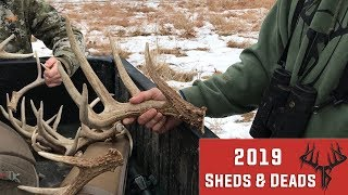 Shed Hunting - Sheds & Deads - 2019 Shed Rally