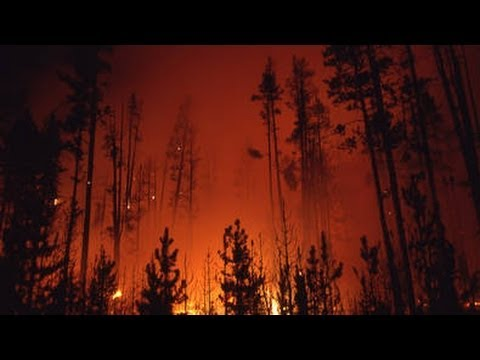 The Story Behind the Yellowstone Fires of 1988 - Retro Report
