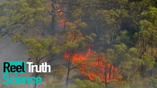 Inside The Wildfire | Season 1 Episode 2 | ReelTruth Science