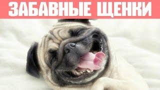 Самые смешные щенки и собаки! Приколы с животными - Лучшие вайны 2016-2017
