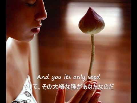 The Rose - Bette Midler (歌詞字幕)English & Japanese Lyrics