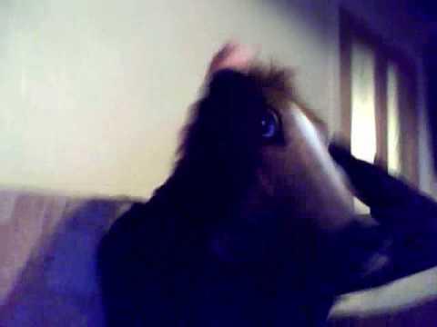 Horse wink Video