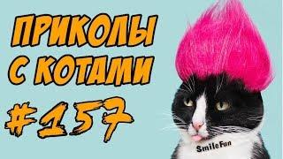 Приколы с Котами - Смешные кошки - Коты Приколы 2018 - Funny Cats