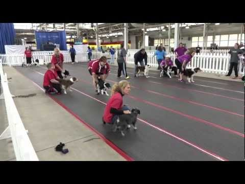 2012 CanAm Classic Flyball Tournament