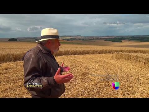 Los 'crop circles' en Inglaterra son señales de paz para Jaime Maussan