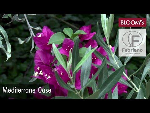 Blühende Dekoideen: Mediterrane Oase Für Ihr Zuhause