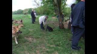 download lagu German Shepherd Dog Rescue Group Walk - May, 2013 gratis