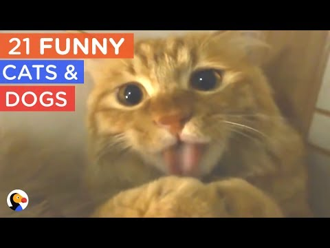 21 FUNNY Cat and Dogs Compilation - Try Not To Laugh | The Dodo Daily