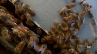 Nature Documentary HD  Silence of the Bees