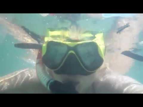 Канцлер Ги - Танго дохлых медуз