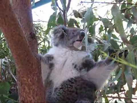 Visit Caversham Wildlife Park,WA,Australia