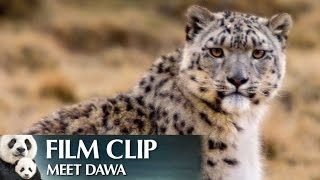 """Meet Dawa"" Clip - Disneynature"