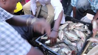 Awassa Fish Market, Awassa town, Ethiopia