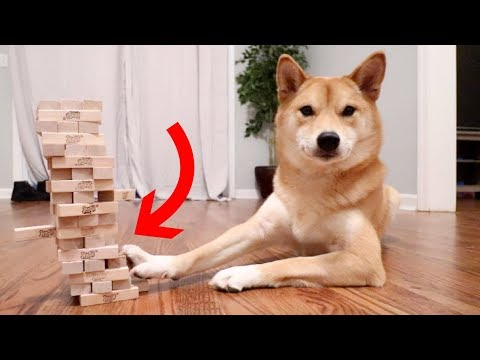 DOG KNOWS HOW TO PLAY JENGA!